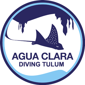Agua Clara Project Diving Tulum Eco Tours & Underwater Media Community