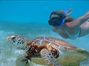 snorkeling with turtles in tulium mexico