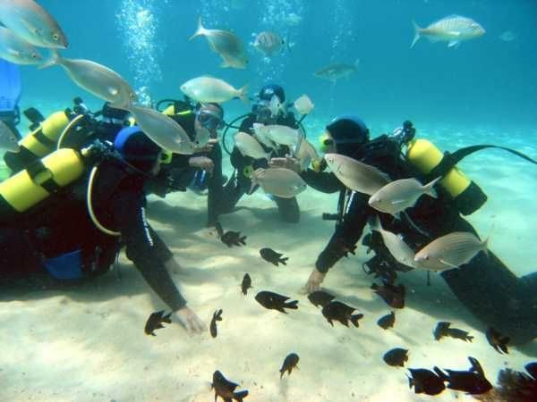 Learn to dive in tulum´s famous reefs and cenotes with agua clara scuba diving PADI certified courses!