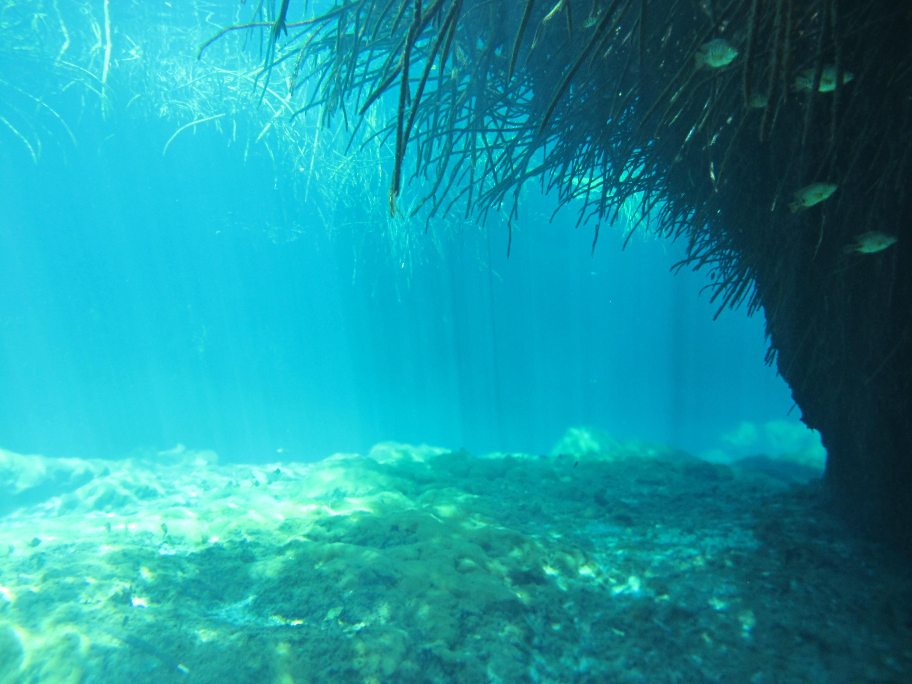 mangrove in casa cenote