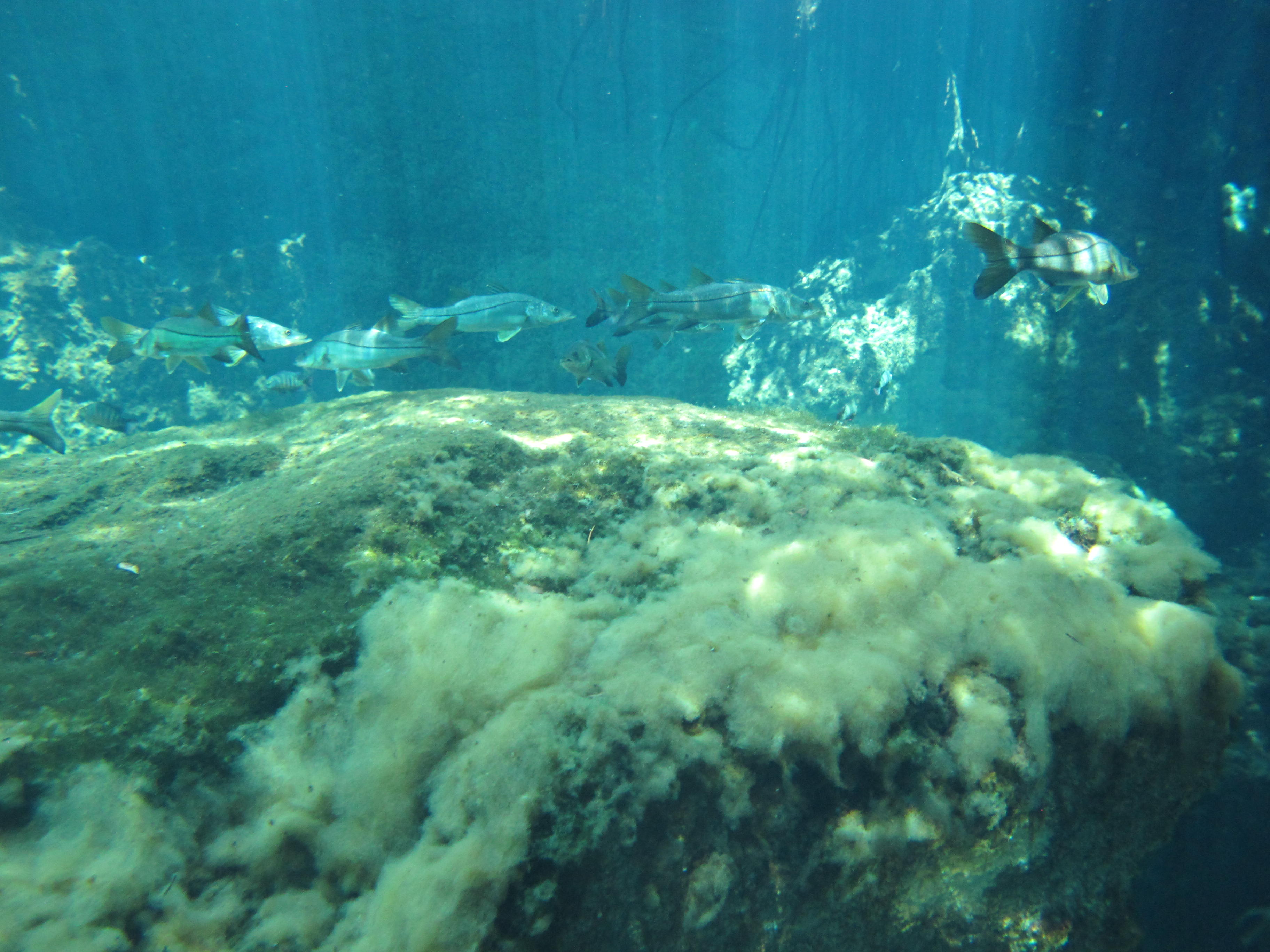 sea bass in casa cenote
