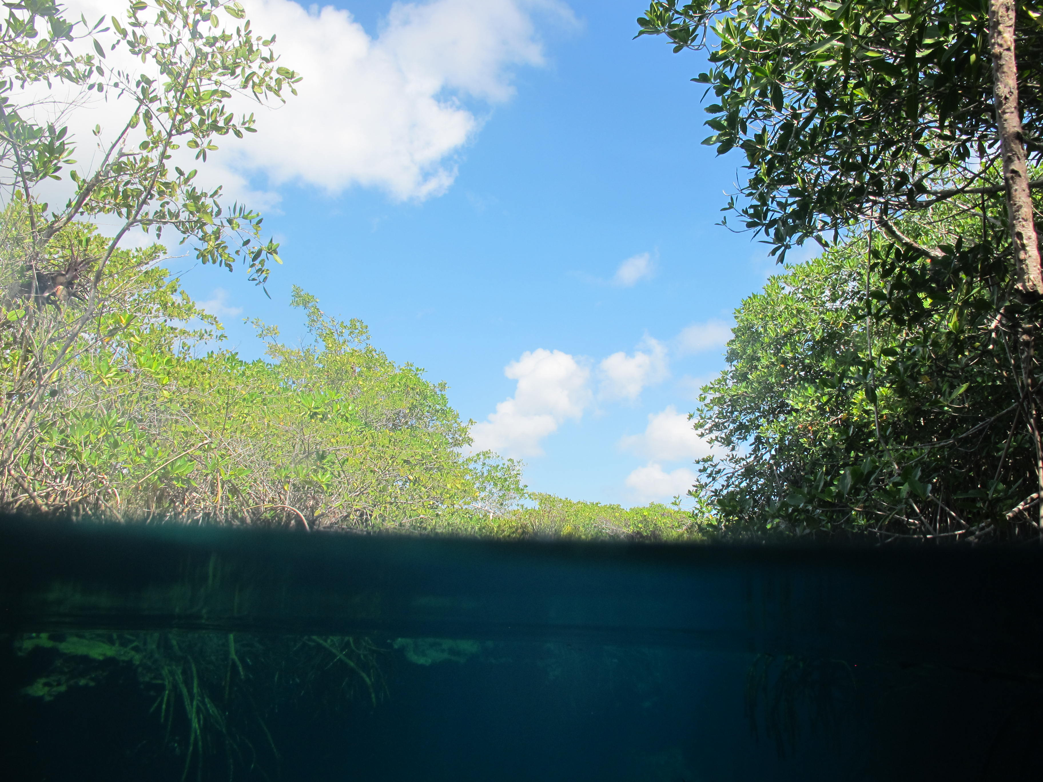 snorkeling casa cenote