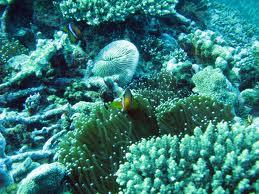 anemonie1_tulum_Diving_scuba_snorkeling4