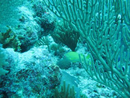scuba-diving-dive-tulum-tour-reef-photos2