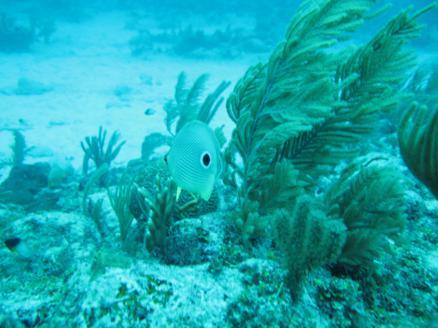 scuba-diving-dive-tulum-tour-reef-photos3