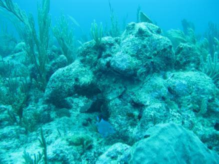 scuba-diving-dive-tulum-tour-reef-photos4
